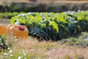 残留農薬の健康被害は?その危険性と身体への影響