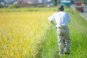 農業求人サイトから見た農業の収入と待遇
