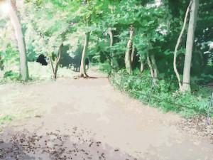 「森」と「林」の違いをわかりやすく解説します